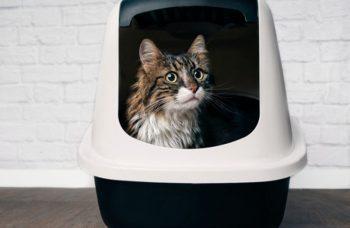 10 Best Cat Litter Boxes