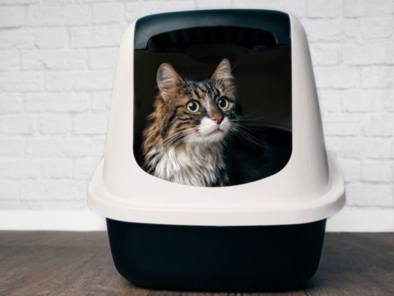 10 Best Cat Litter Boxes in 2020