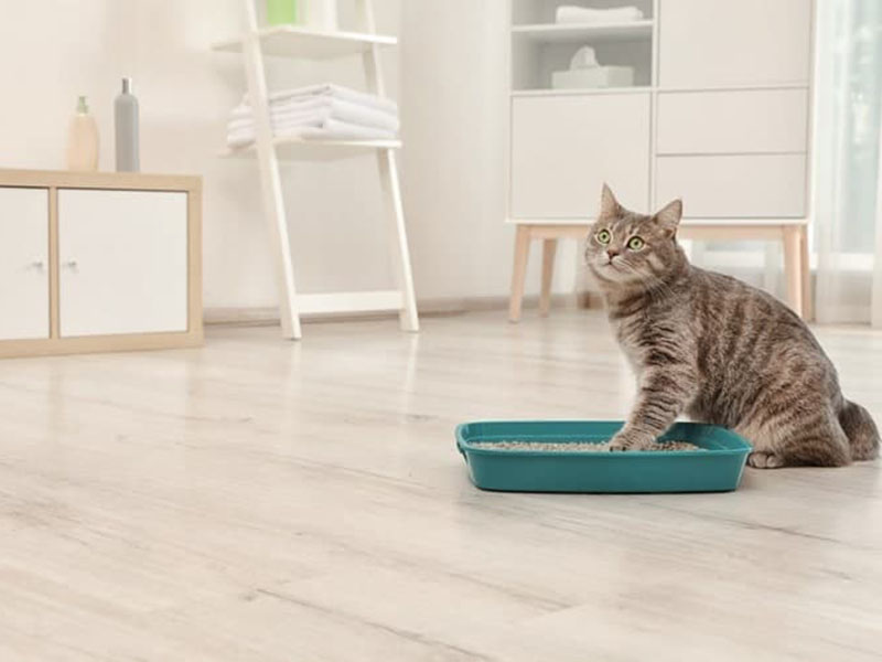 10 Best Cat Litters for 2020