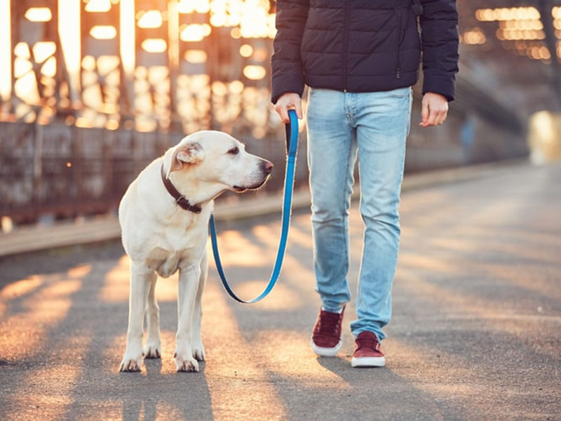 12 Best Dog Leashes in 2020
